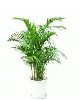 提到低碳,环保。大家首先想到的就是绿色植物。其实,我们可以在家中种植一些绿色植物,这样不仅可以陶冶情操,也可以净化空气,美化环境。但是并不是什么植物都适合在家中种植,下面就让我们来看看,意上神州为您推荐适合在家中住的几种植物吧。